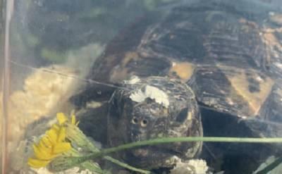 В Петербурге через интернет пытались продать редкую краснокнижную черепаху