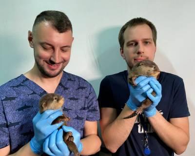 В петербургском океанариуме рассказали о пополнении в семье выдр