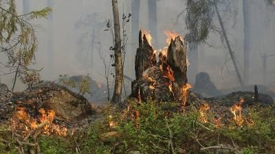 Лесные пожары в Башкирии: ситуация под контролем, новых очагов нет