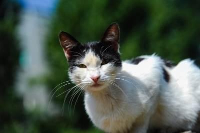 Под Волгоградом объявили карантин по бешенству из-за больной кошки