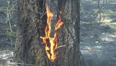 В Башкирии за сутки возникло 5 новых очагов лесных пожаров
