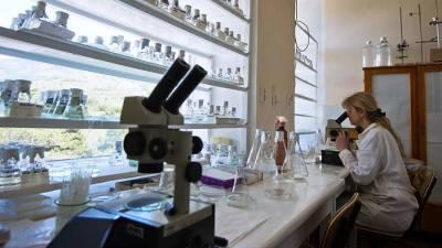 Ученые разрабатывают средство от тромбоза при COVID-19 из водорослей