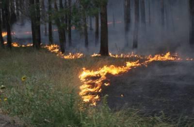 За сутки в Удмуртии произошло сразу два лесных пожара