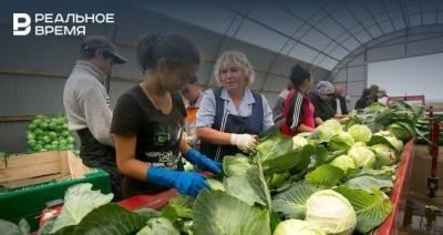 В Татарстане за неделю снизились цены на большую часть продуктов «борщевого набора»