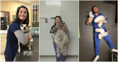 15 ветеринаров, которым просто нужно было показать своих самых очаровательных пациентов