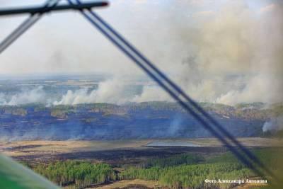 В августе в лесах Курганской области возможно повышение пожарной опасности