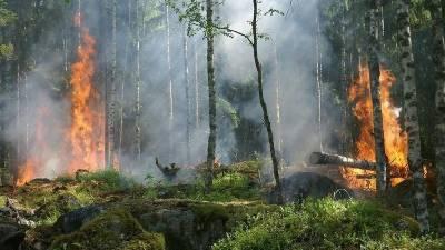 Жителям Башкирии запретили ходить в лес