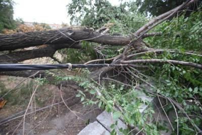 В Волгограде из-за сильного ветра на 7-летнюю девочку упало дерево