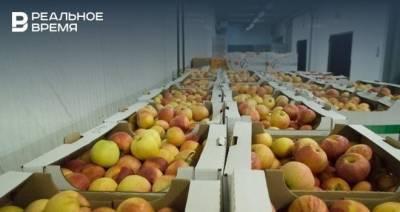 В Татарстане организовали акцию в поддержку местных садоводов, продающих яблоки