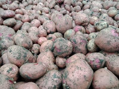 «Индекс картошки» показал, как на самом деле просели доходы жителей Башкирии