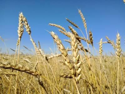 Башкирия потеряла половину урожая из-за засухи