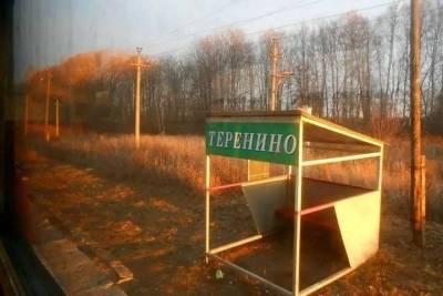 Неизвестные украли туи с кладбища в Смоленской области