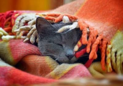 Ночью столбики термометров в Смоленской области опустятся до +4