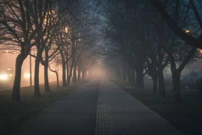 24 августа Смоленскую область укроет туман