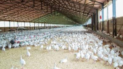 Правительство расширило меры поддержки птицеводов