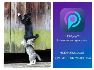 В Новосибирске заработало мобильное приложение для взаимопомощи людей