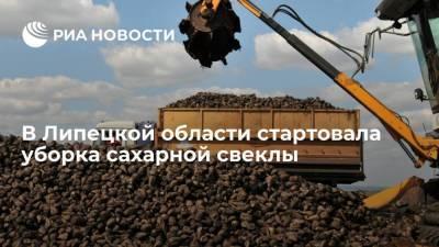 В Липецкой области стартовала уборка сахарной свеклы