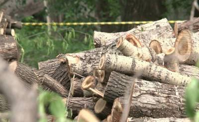 Мораторий на рубку деревьев продлен до 2024 года. Также будет создана экологическая полиция. Что еще предложил Мирзиёев для спасения экологии