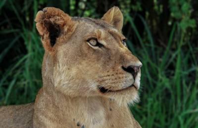 Жители Волгоградской области поселили в квартире настоящего льва