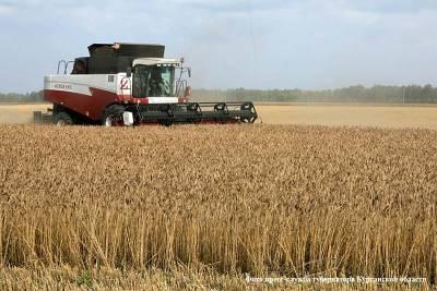 Последствия засухи: урожайность яровых в Курганской области почти в два раза меньше прошлогодней