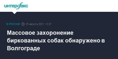 Массовое захоронение биркованных собак обнаружено в Волгограде