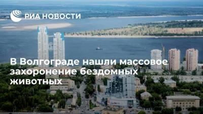 В Волгограде нашли массовое захоронение бездомных животных, проводится проверка