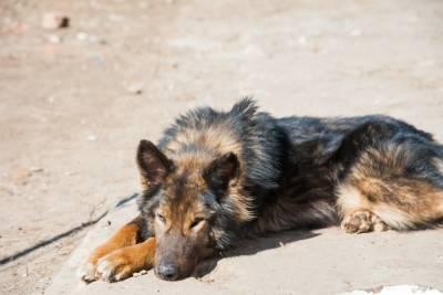 В Волгограде обнаружили захоронение бездомных собак с бирками