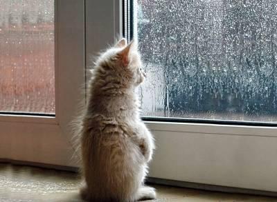 Дожди и грозы. Смоленские синоптики рассказали о погоде 26 августа