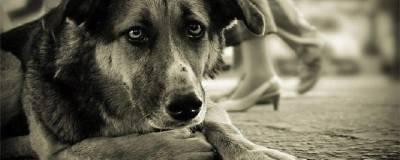 В Волгограде проводится проверка после обнаружения массового захоронения бездомных собак