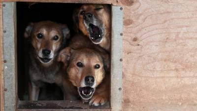В Волгограде обнаружили массовое захоронение собак