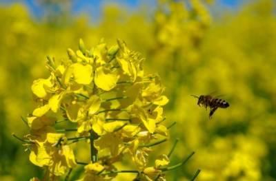 Свердловские пчеловоды готовят иск на 9 млн рублей из-за массовой гибели насекомых