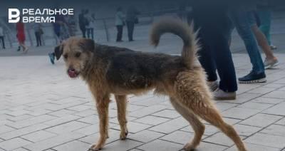 Прокуратура проведет проверку после нападения собаки на ребенка в Татарстане