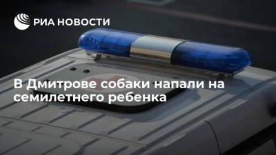 Собаки напали на семилетнего ребенка в Дмитрове, прокуратура проводит проверку
