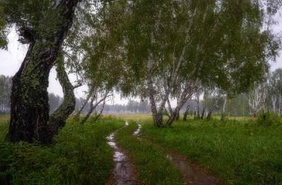 Насколько дождливо будет в Смоленской области в понедельник