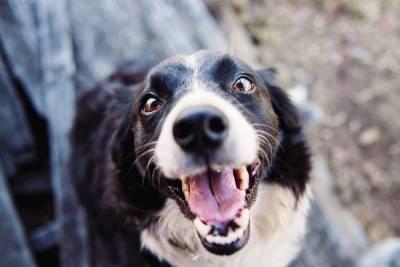 18 случаев бешенства у животных выявили смоленские медики за полгода