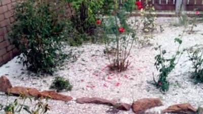 Вести. Град повредил посевы в Мамонтовском районе Алтайского края