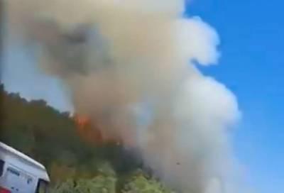 Лесные пожары захватили Израиль и подобрались к Иерусалиму