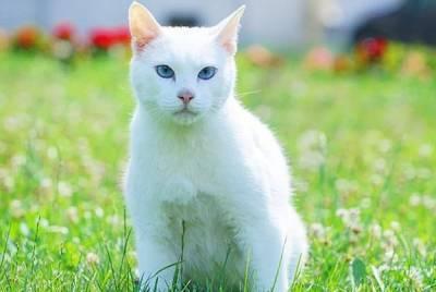 Петербургский кот-оракул предсказал, закончится ли пандемия коронавируса в этом году