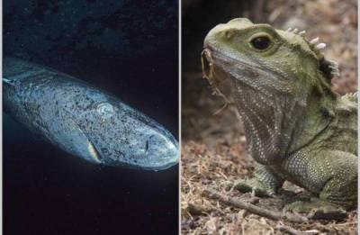 10 существ на планете, которые могут прожить несколько человеческих жизней