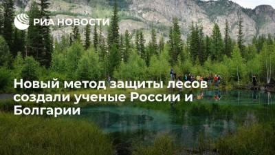 Новый метод защиты лесов создали ученые России и Болгарии