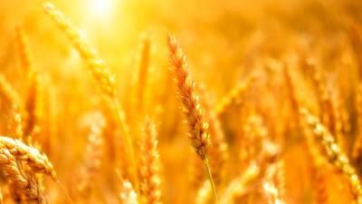 Экспорт сельхозпродукции из России вырос с начала года на 16%