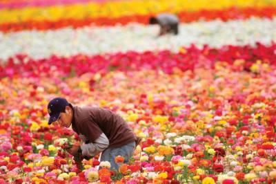 Около 2 млн. долларов выделено на развитие цветоводства в Узбекистане