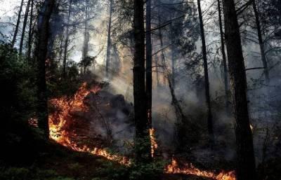 Лесные пожары в турецкой Анталье локализованы