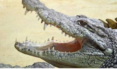 В Херсонской области отдыхающие встретили полутораметрового аллигатора