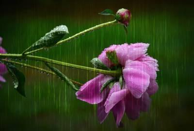 Дожди и грозы ожидаются в Беларуси 7 августа