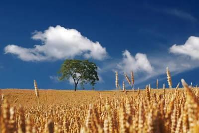 Новью 8 августа в Смоленской области будут дожди и грозы, а днем сухо