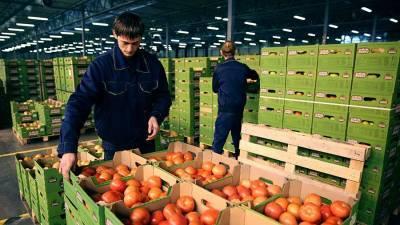 Цены на доставку овощей по России хотят снизить