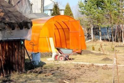 Житель Хабаровского края вырастил на даче 750 кустов конопли