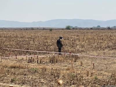 В Азербайджане от мин и неразорвавшихся боеприпасов очищена территория площадью свыше 120 га