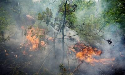 Власти Башкирии оценивают ущерб от лесных пожаров в 2021г в 21 млн руб., сгорело более 14 тыс. га леса